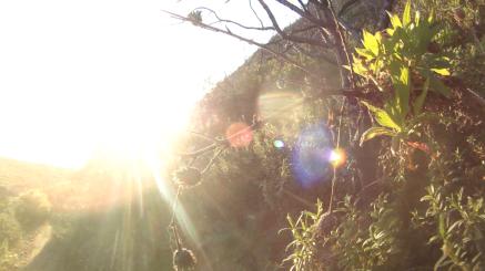 Screen sun
